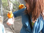 Kate in the Aviary