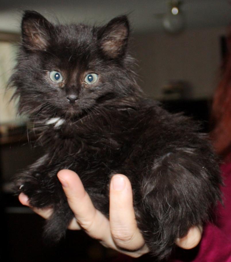 Strider, the Krazy Kitty.