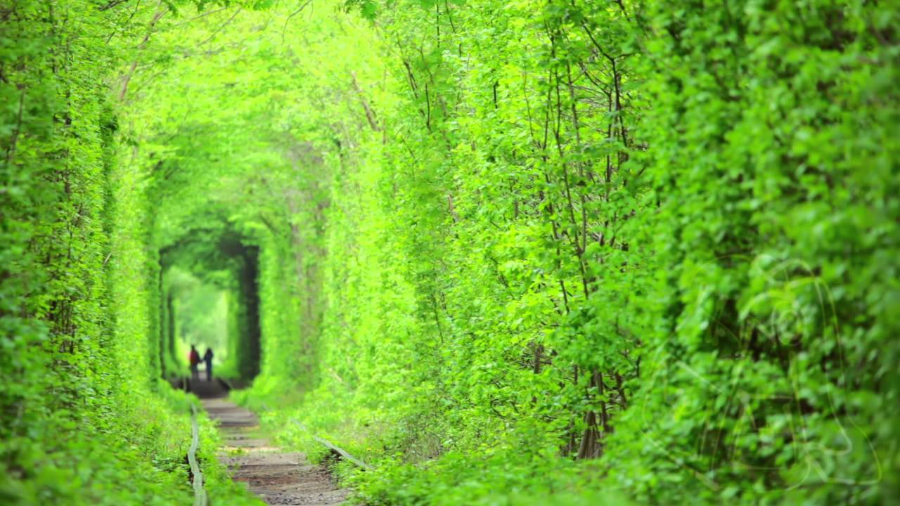 A Real, Living and Gorgeous Tunnel of Love