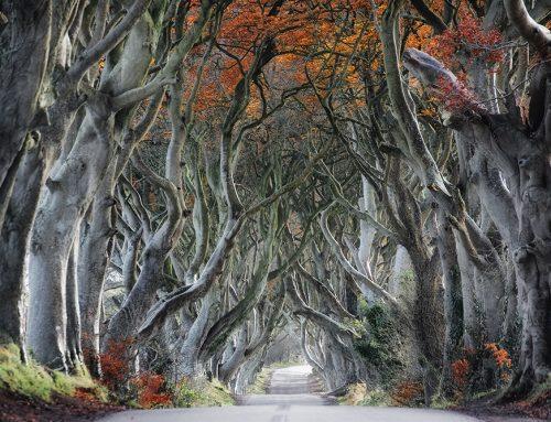It's Tolkien Week